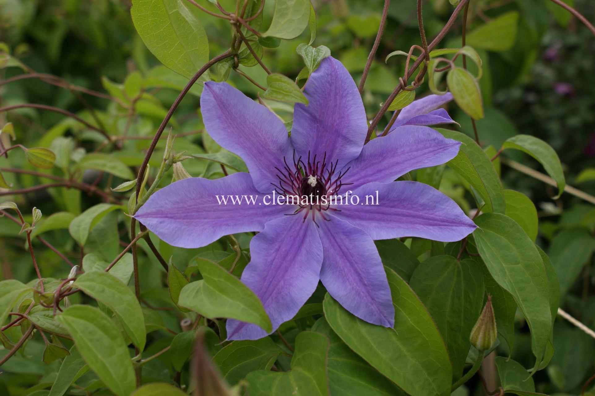 'Blue Ravine'