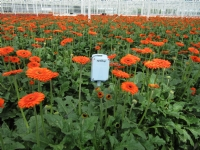 agrisensys bloemen