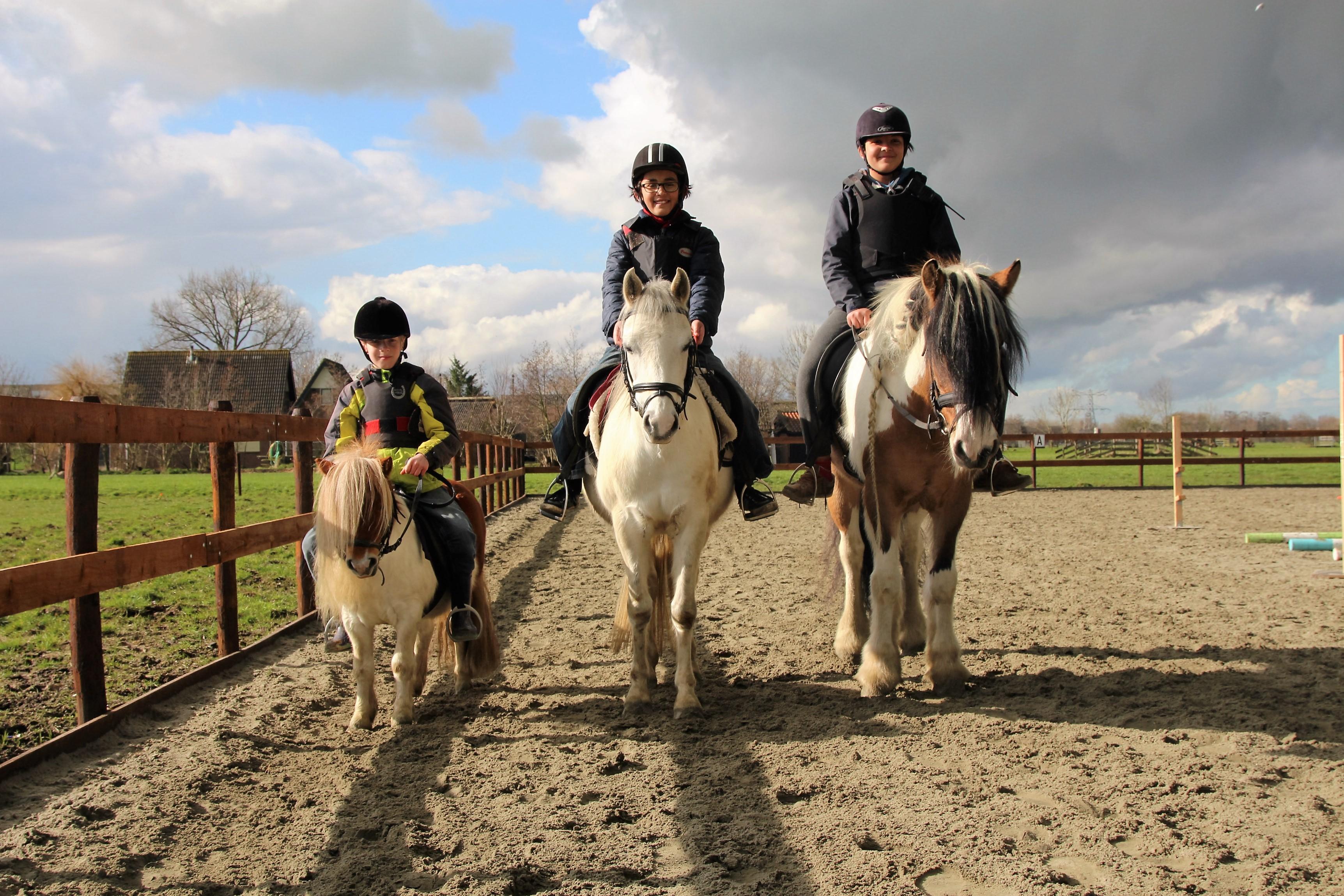paard verzorgen spel