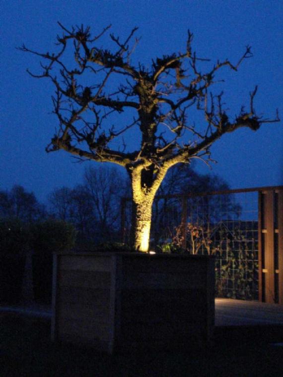 Uitlichten fruitboom jpg for Spiegelvijver bak