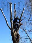 Onderhoud_boomverzorging