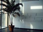 Palmboom in de hal1.JPG