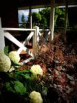 zomerbloeiers (2).JPG