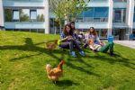 dieren_schoolplein
