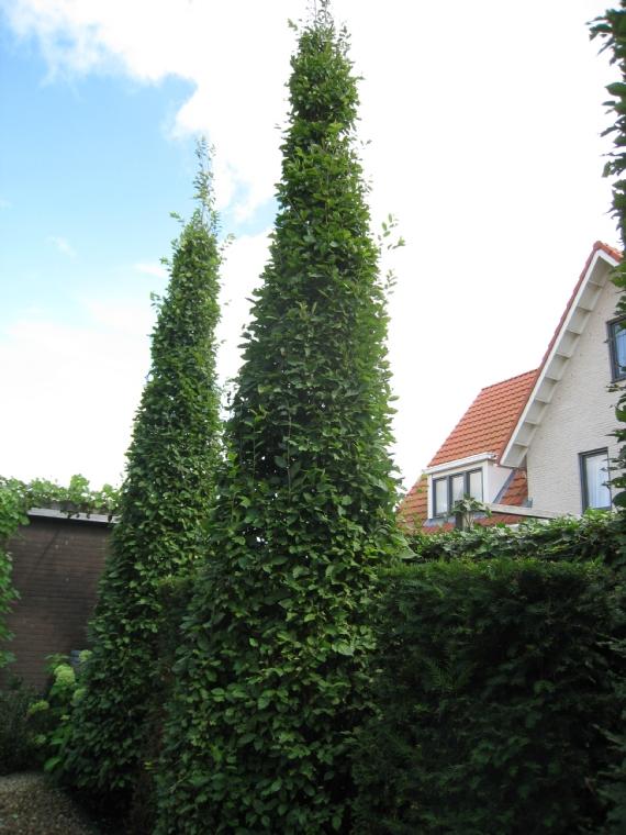 Strakke bomen jpg for Spiegelvijver bak