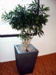 Plant3.JPG