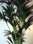 Plant4.JPG