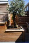 hardhouten plantenbak met olijf.JPG