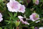 Bloemen_bijen