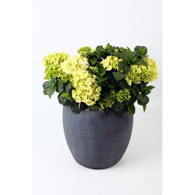 Hydrangea-in-Ball-Pot