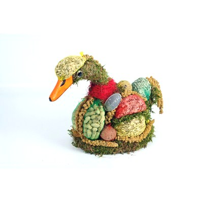 Bird-Food-Duck