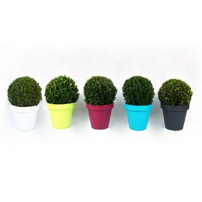 Buxus-Ball-in-Luxe-Plastic-Pot