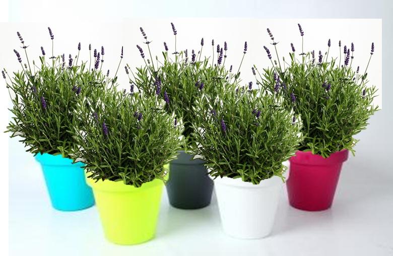 Plants in Luxury Colour Pot
