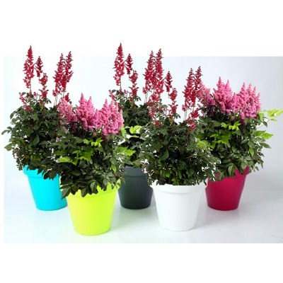 Plants-in-Luxury-Colour-Pot