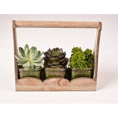 Sempervivum-Arrangement