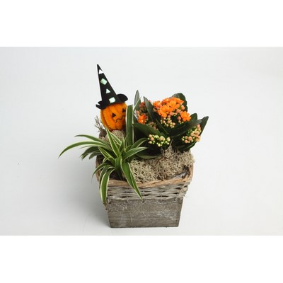 Halloween-Arrangement