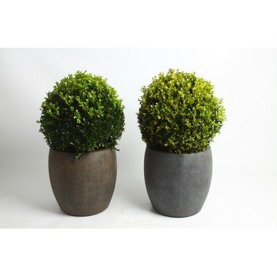 Buxus-Ball-in-Ball-Pot