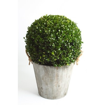 Buxus-Ball-in-Wooden-Pot