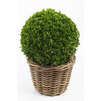 Buxus-Ball-in-Wicker-Basket