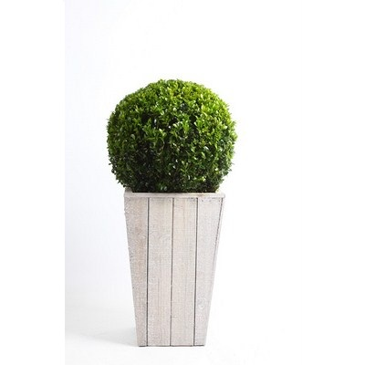 Buxus-Ball-in-Scaffolding-Wooden-Pot