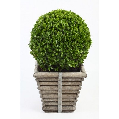 Buxus-Ball-in-Square-Wooden-Basket