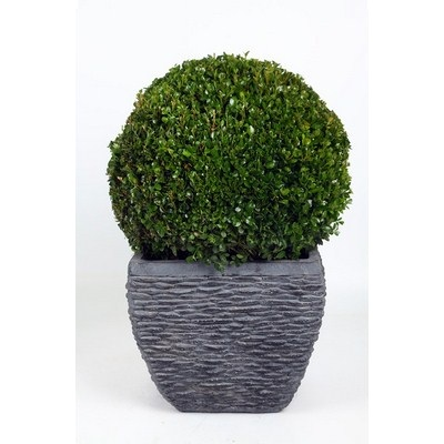 Buxus-Ball-in-Square-Pot