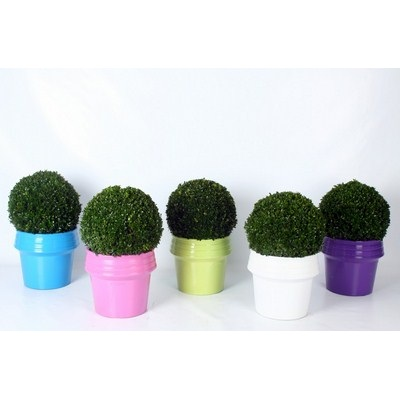 Buxus-Ball-in-Zinc-Colour-Pot