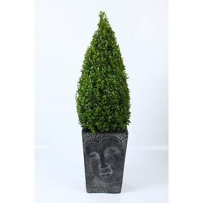 Buxus-Pyramid-in-Buddha-Pot