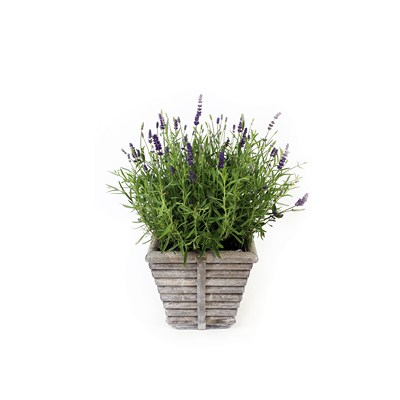 Lavender-in-Square-Wooden-Rib-Pot