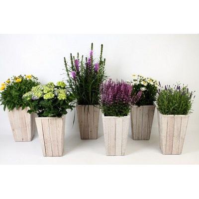 Perennials in Scaffolding Wooden Pot