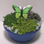 rots-blauweschaal-groen-764x764