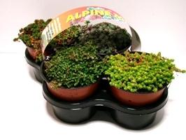 rotsplant-4pack-266x200
