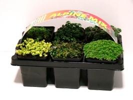 rotsplant-6pack-266x200
